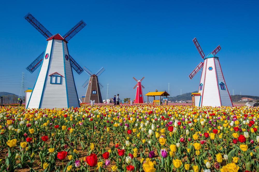 netherlands widmills